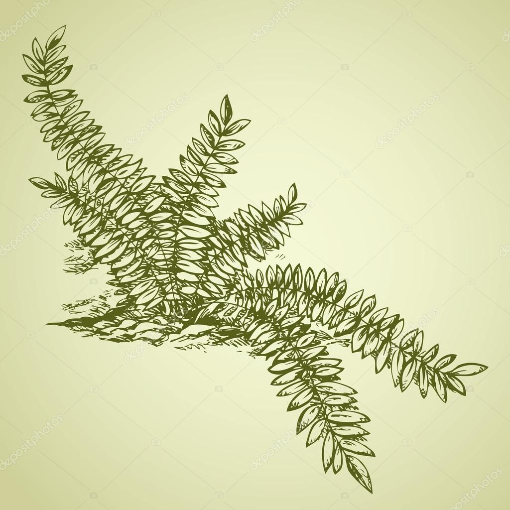 Fern. Vector drawing