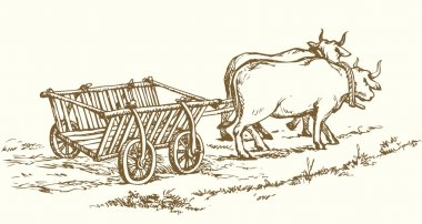 Empty cart drawn by oxen. Vector drawing