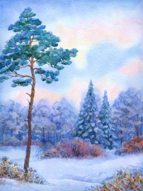 Watercolor landscape. Tall pine tree in winter forest