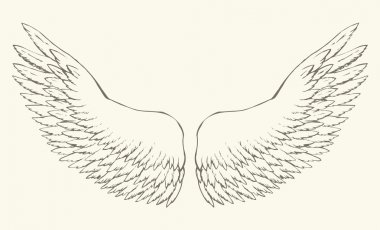 Outstretched wings. Vector drawing