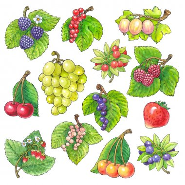 Watercolor picture of different fruits