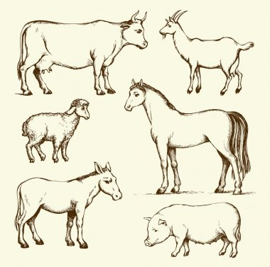 Farm animals. Vector drawing
