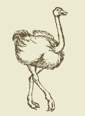 Going ostrich. Vector drawing