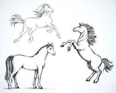 Horses. Vector drawing