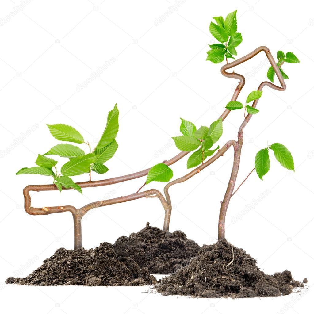 Plant arrow