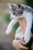 Carino gatto in mano. Giovane donna che tiene adorabile gatto.