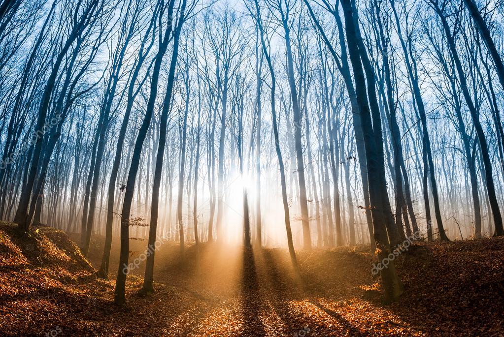 Фотообои Beautiful morning scene in the forest with sun rays and long shadows