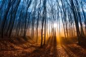 Fotografie krásné ráno scéna v lese s paprsky slunce a dlouhé stíny