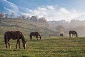 Stádo koní, podzimní krajina