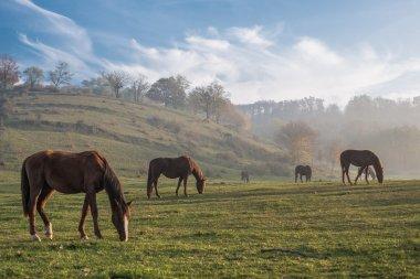 Herd of Horses, autumn landscape