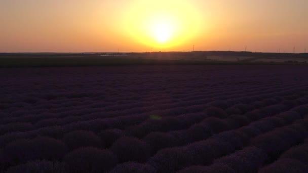 Letecký pohled na kvetoucí pole levandulový květ v nekonečných řadách. Západ slunce výstřel
