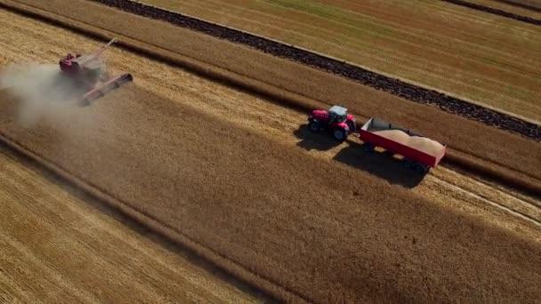 Naplemente, valamint a betakarítás működő gépek egyesíti és traktorok, a mező a búza. Mezőgazdaság koncepcióját, videóinak