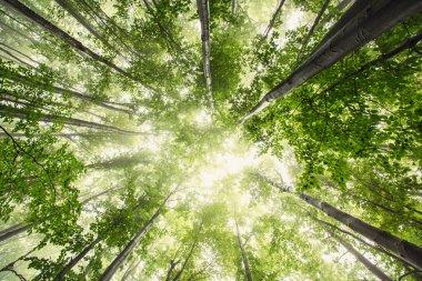 """Картина, постер, плакат, фотообои """"природа по утрам в туманном весеннем лесу с солнцем печать картины"""", артикул 53414501"""