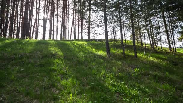 Luce solare nella foresta verde alla montagna