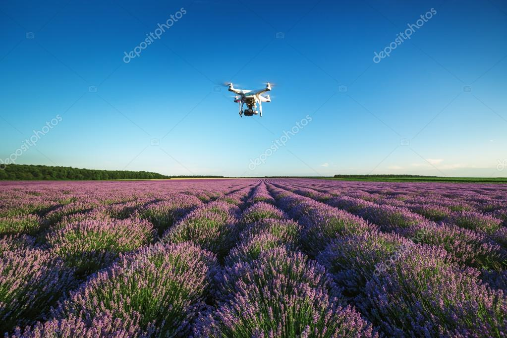 A personal drone flying over beautiful lavender field