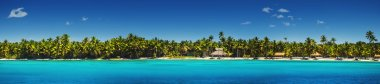 Panoramic view of Exotic Palm trees on the tropical beac