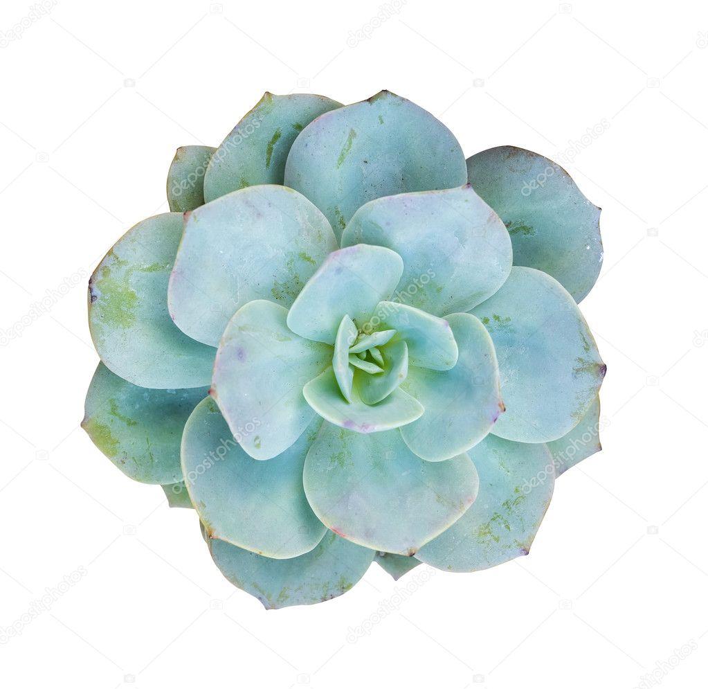 shot of Miniature succulent plants