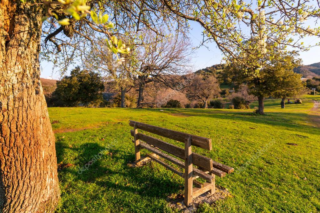 Serenity spring garden