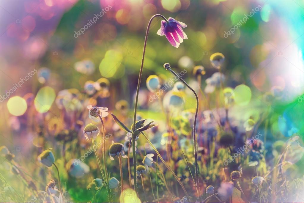 Дикие цветы на лугу — Стоковое фото © kamchatka #101013412