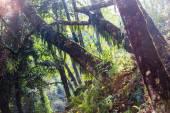 Jungle, a Himalája hegység