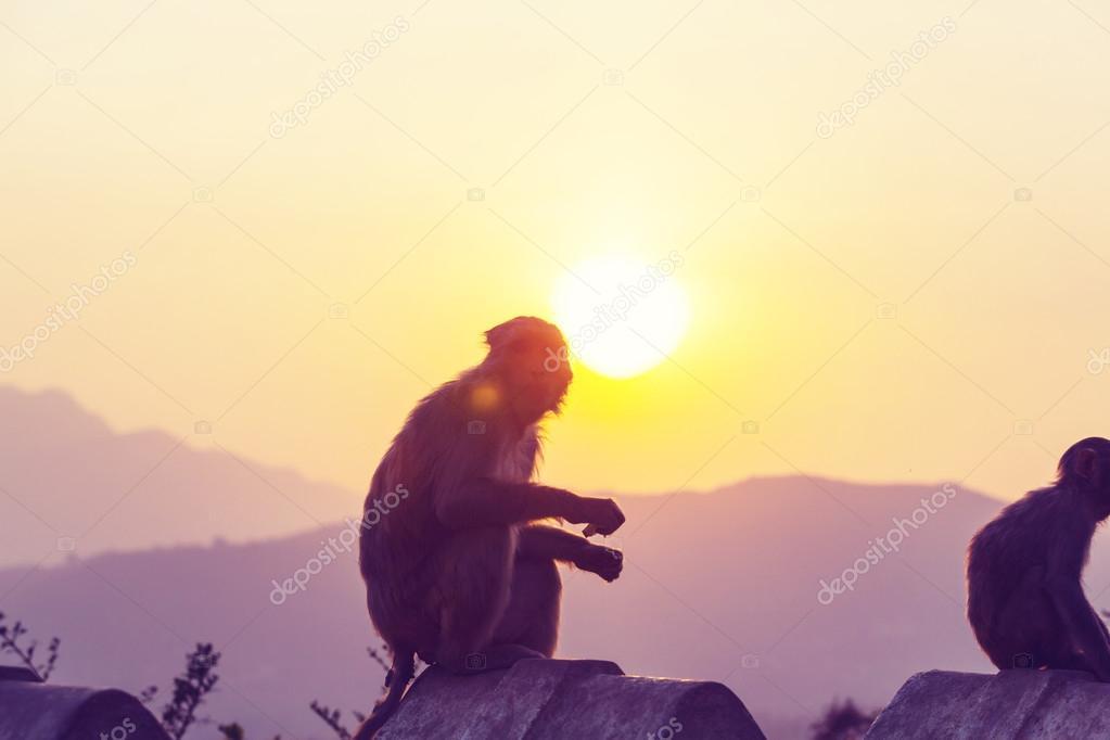 Monkeys in Indonesian temple