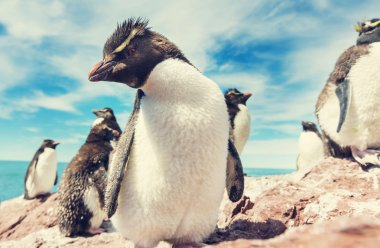 penguins in Southern Argentina