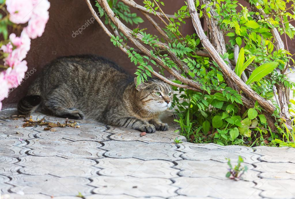 Cat relaxing near green plant