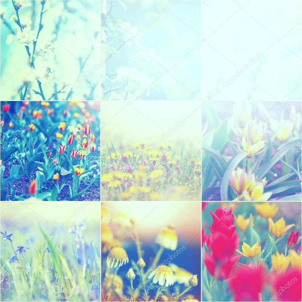 Spring Flowers Collage Stock Photo Kamchatka 112715970
