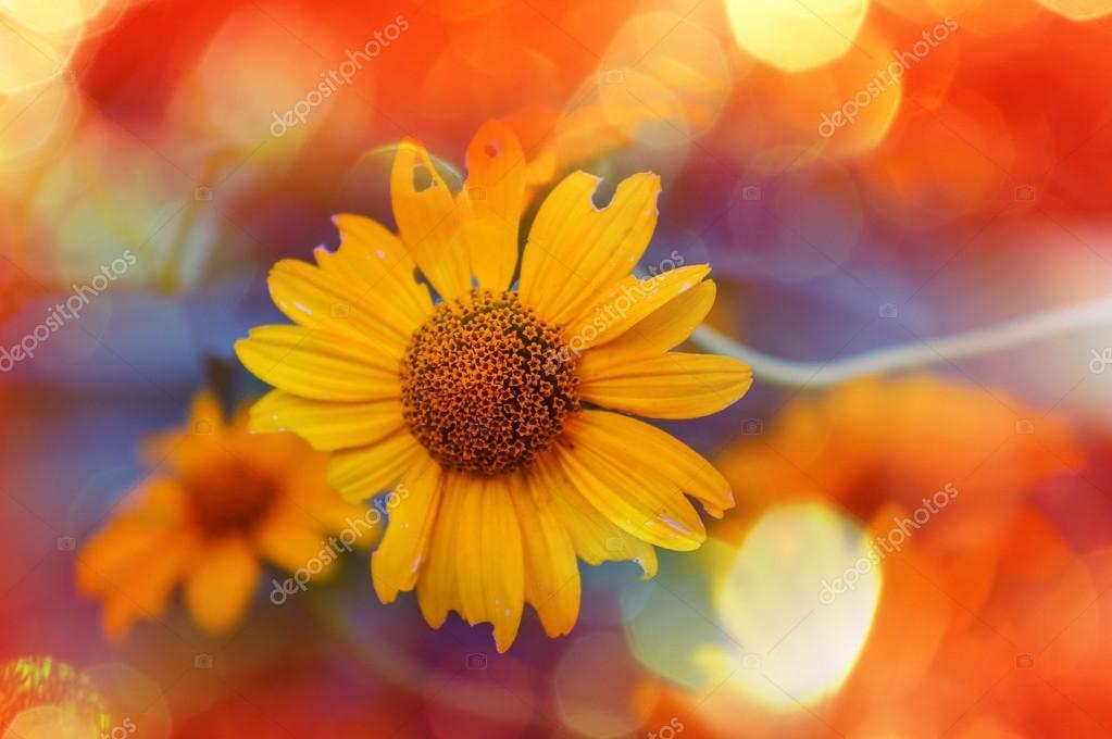 Nombres De Flores Silvestres Amarillas Flores Amarillas Silvestres