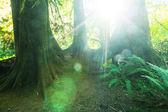 Les v Olympijském národním parku