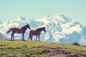 Pferde in den Bergen