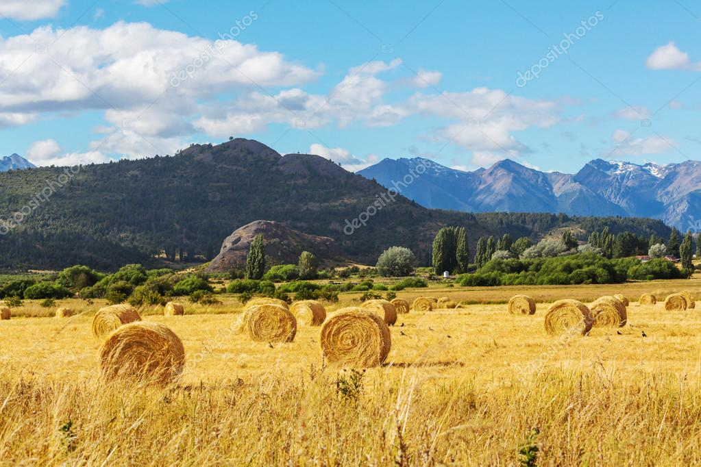 Hay Rolls On Field Stock Photo C Kamchatka 65674371