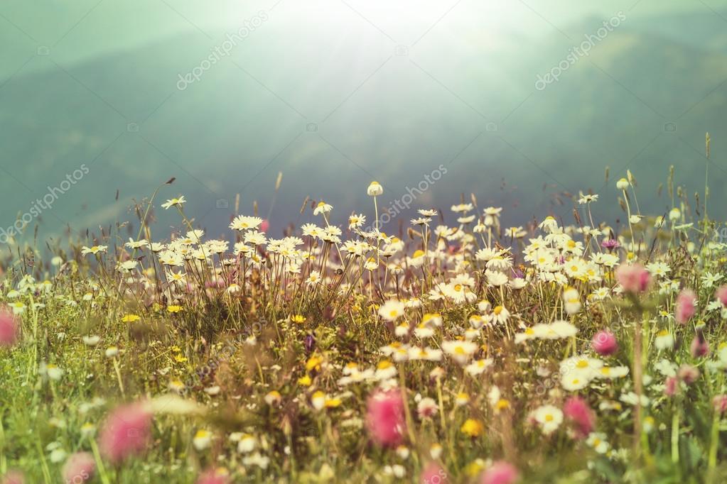 De Flores En La Montana: Flores De Pradera De Montaña