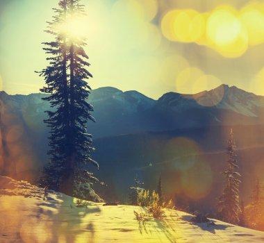 Winter landscape   in Glacier Park, Montana, USA stock vector