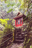 Photo Trail to waterfall in Indonesian