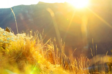 sunny Mountain meadow