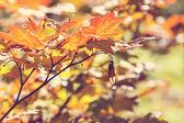hagy a őszi szezon