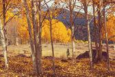 barevný Les na podzim