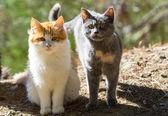 két aranyos macska