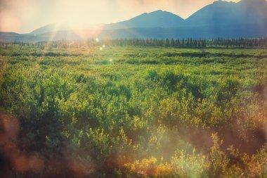 Polar tundra landscapes