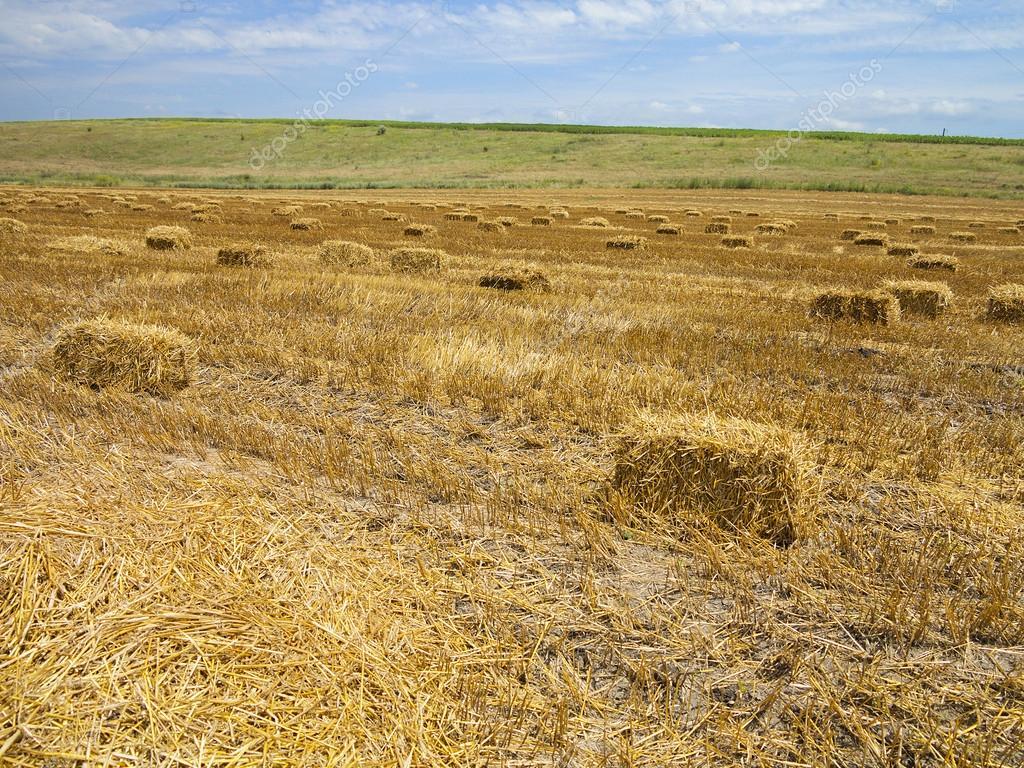 Balle di paglia in campo di grano raccolto agricolo foto for Piani di garage di balle di paglia