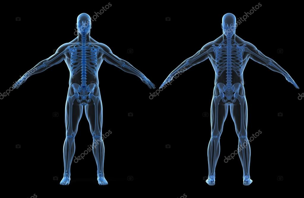 3d Render Of Human Body And Skeleton Stock Photo Digitalgenetics