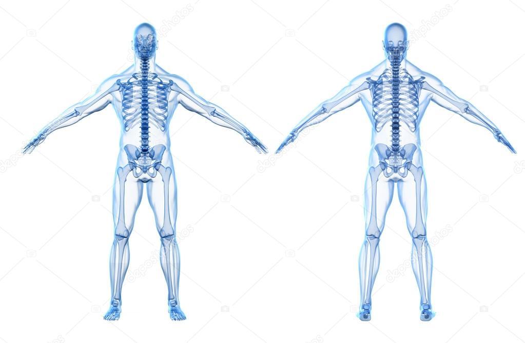 render 3D del cuerpo humano y esqueleto — Fotos de Stock ...