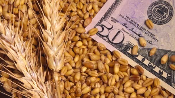Harvested wheat crop grains price in United States of America