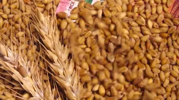 Harvested wheat crop grains price in European Union