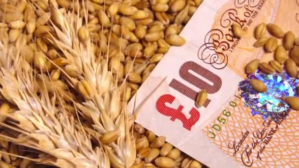 Harvested wheat crop grains price in Great Britain