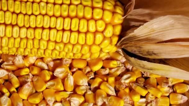 Osivo kukuřice a ucho na otočnou deskou