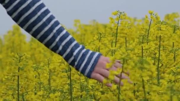 Female hand touching gentle blooming rapeseed crops flowers