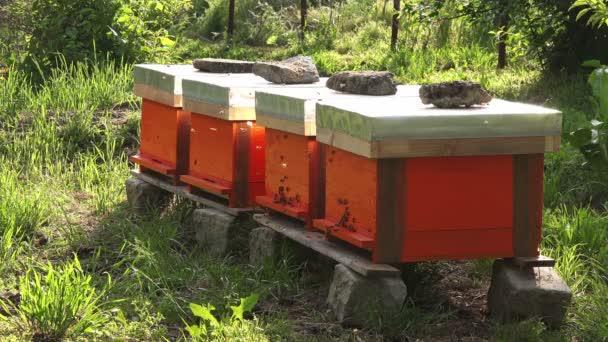 Roj včel a úly