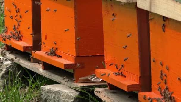 Roj zaneprázdněn včel do úlu